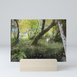 Maisie at the Pond Mini Art Print