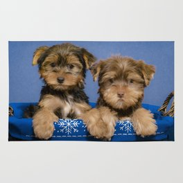 Two Yorkshire Terrier Puppies Hold Paws in a Blue and White Snowflake Basket Rug