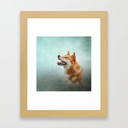 Drawing Japanese Shiba Inu dog 2 Framed Art Print
