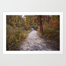 Fall and North DuPage Woods Trail Art Print