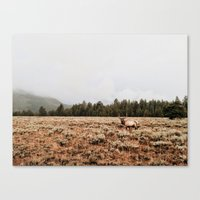 elk Canvas Prints featuring Elk.  by Joe Greer