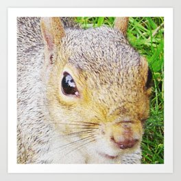 The many faces of Squirrel 5 Art Print
