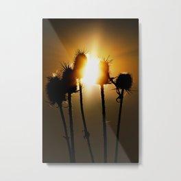 Catch the sun Metal Print