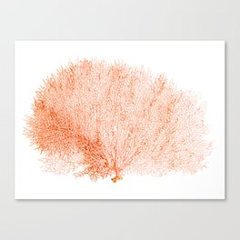 """""""Sea Fan Coral""""  Canvas Print"""
