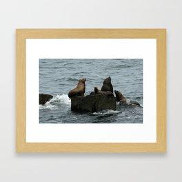 Stellar Sea Lions Framed Art Print