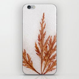 Iceolatia iPhone Skin