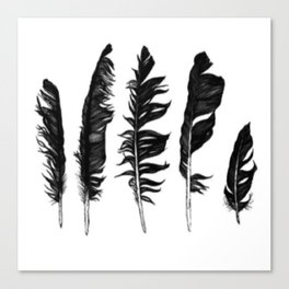 Feathers. Canvas Print