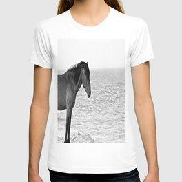 Assateague Pony T-shirt