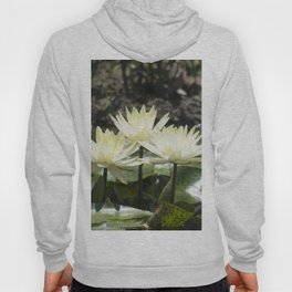 Longwood Gardens - Spring Series 275 Hoody