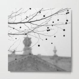 Plane Tree Fruits Metal Print