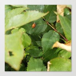 Lady bug surprise Canvas Print