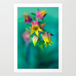 A conscientious and  unpretentious Agapanthus getting anxious to leave Kansas... Art Print