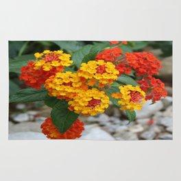 Macro Of Shrub Verbenas or Lantanas (Lantana Camara)  Rug