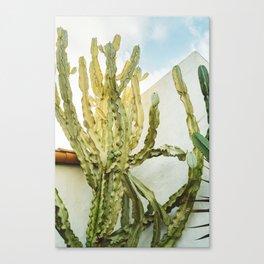 California Cactus Canvas Print