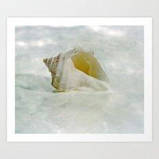 White Seashell Art Print