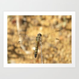 Dragonfly friend Art Print