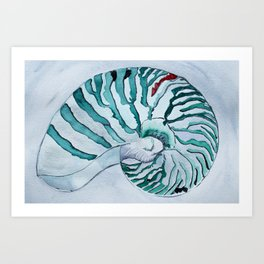 Turquoise Nautilus Shell painting watercolor Art Print