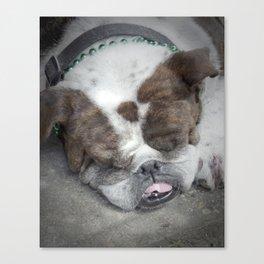 Bulldog (St. Patrick's Day), 2011.  New Orleans, LA. Canvas Print