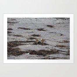 Competing Crabs Art Print