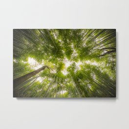 Bamboo Forrest shot straight up into the sky with fish-eye lens. Metal Print