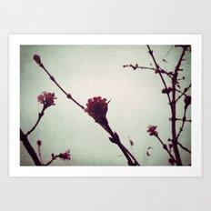 Winter Blossom I Art Print