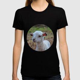 baa-lamb T-shirt