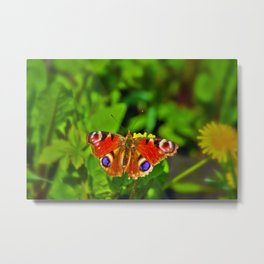The Peacock butterfly Metal Print