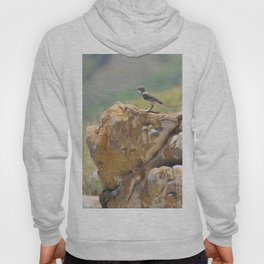 Cape Wagtail Hoody