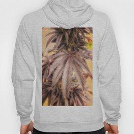 Totally Dope marijuana plant photo weed leaf Hoody