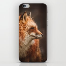 Red Fox (Vulpes vulpes) iPhone Skin