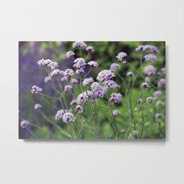 Longwood Gardens - Spring Series 159 Metal Print