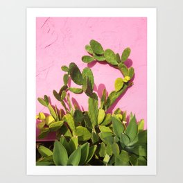 Pink Wall/Green Cactus  Art Print
