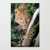 jaguar Canvas Prints featuring JAGUAR by Ylenia Pizzetti