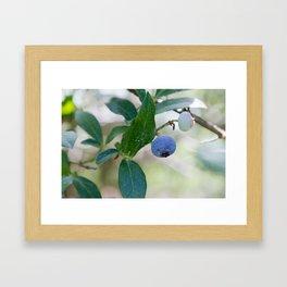 Blueberry Farm 2 Framed Art Print