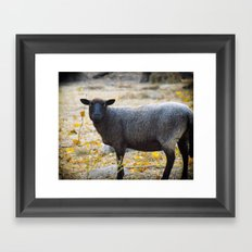 Bah Bah Said the Black Sheep Framed Art Print