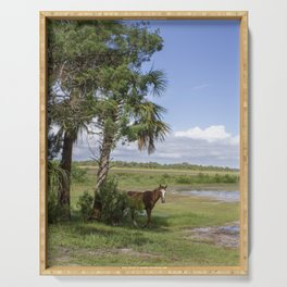 Wild Horse roams free on Cumberland Island, GA Serving Tray