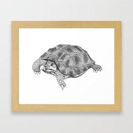 Little tortoise Framed Art Print