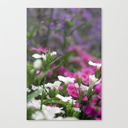 Shakespeare Garden 11. Colorful Corner Canvas Print
