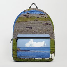 King Penguins on the beach with an Iceberg behind Backpack