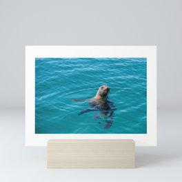 Baja Sea Lion Floating Vertically Mini Art Print