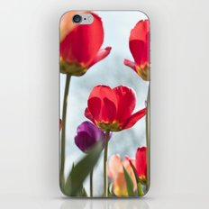 Tulip Series 5 iPhone & iPod Skin