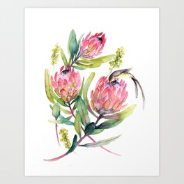 King Protea and Bird Watercolor Illustration Botanical Design Art Print