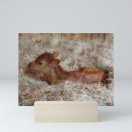 Cute baby cow Mini Art Print