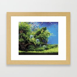 Freshwater Angelfish aquarium Framed Art Print