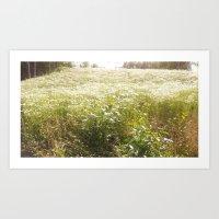 Sunbathed Meadow Art Print
