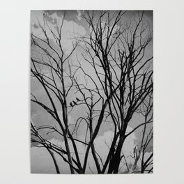 Black and White Crows Black Birds in a Tree Bokah Rustic A275 Poster