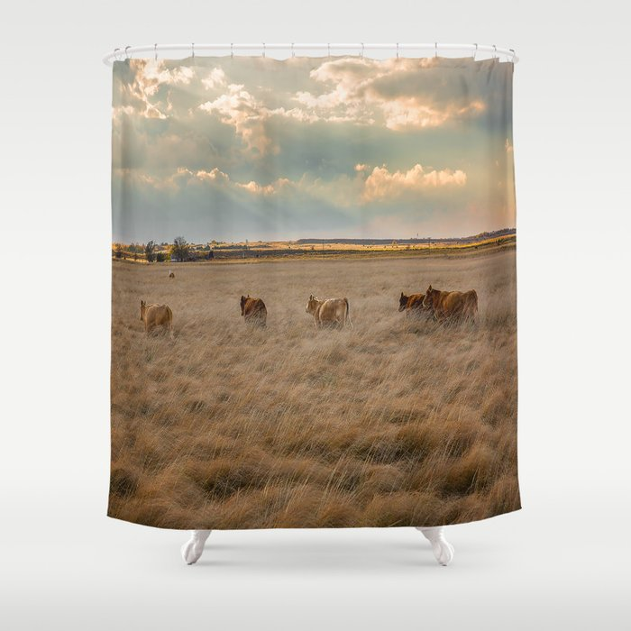 Cows Among the Grass - Cattle Wade Through a Field in Texas Shower Curtain
