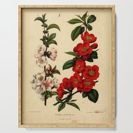 Vintage Botanical Print - 1868 - Japanese quince Serving Tray