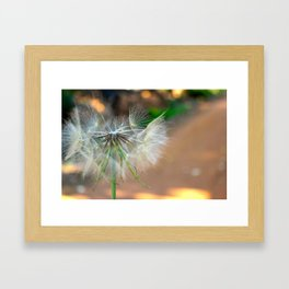 Wishes on Wishes  Framed Art Print