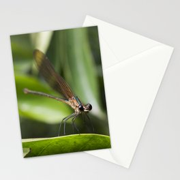 Baby Dragonfly - Insects Photography Stationery Cards